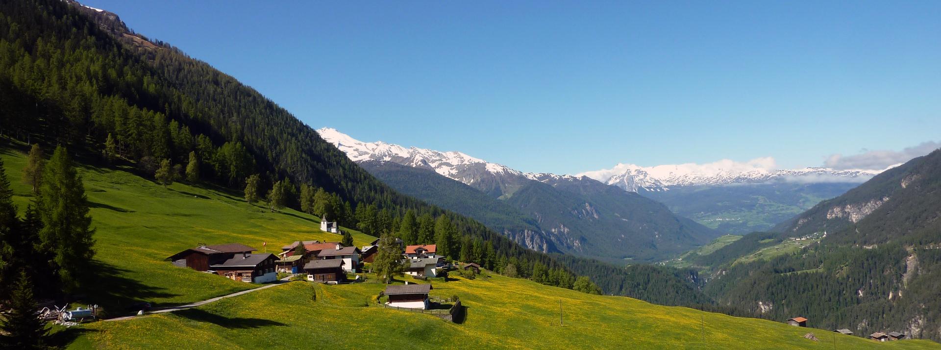 Jenisberg im Sommer